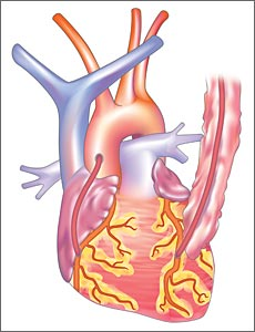 procedures coronary artery bypass grafting
